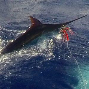 Sea hawk special oahu deepsea fishing for Deep sea fishing oahu